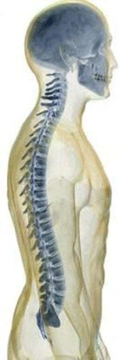 De schedel en de wervelkolom beschermen het zenuwstelsel. De chiropractor gebruikt speciale technieken om via de wervelkolom en de schedel de functie van het zenuwstesel te beinvloeden.