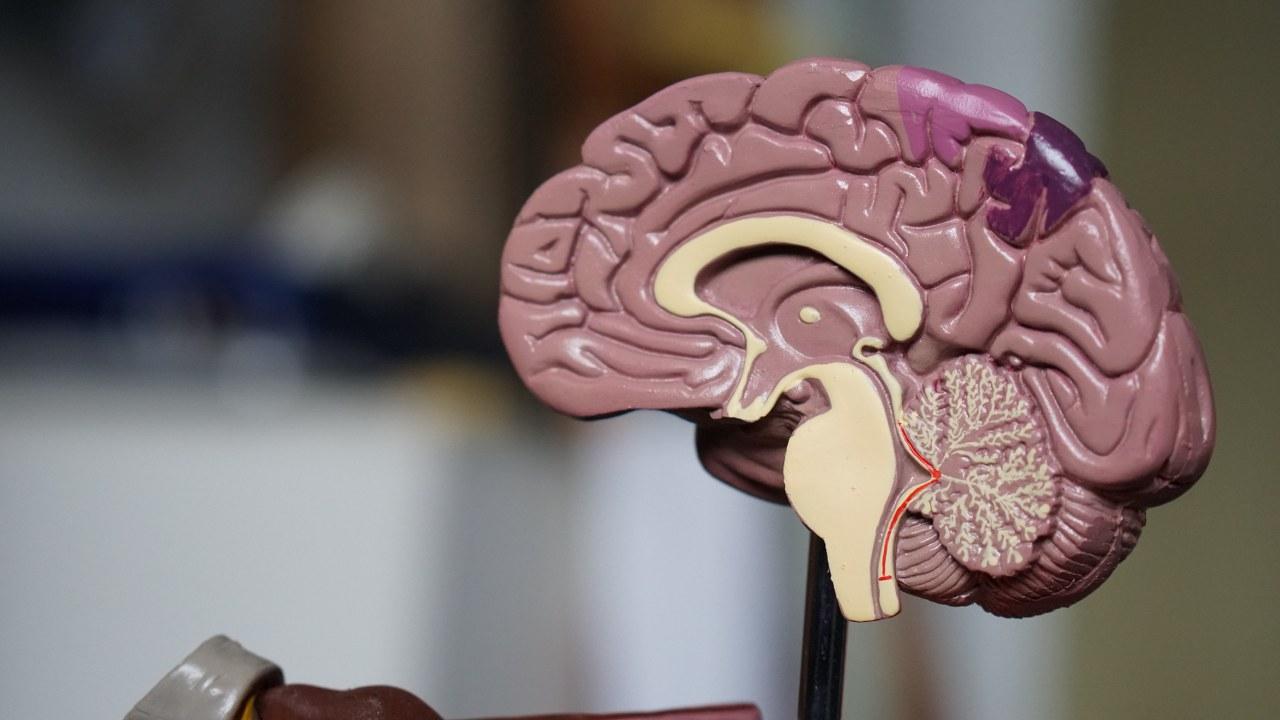 Hoofdpijn & migraine behandelen bij chiropractie Blaauw in Gouda